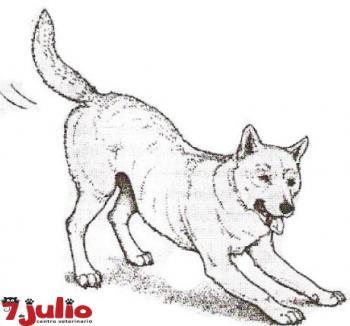 ¿Qué quiere trasmitir este perro con esta postura?